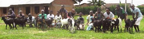 Distribution de chèvres aux orphelins du sida au Rwanda
