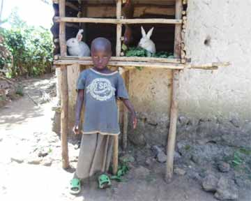 Les deux lapins d'un orphelin du sida au Rwanda dans leur clapier.