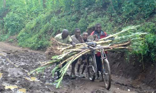 Transport de cannes à sucre par les enfants des rues au Rwanda width=