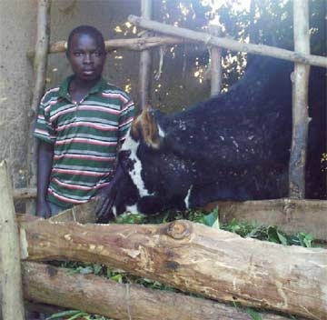 Elevage de petit bétail pour la sécurité alimentaire des orphelins du sida