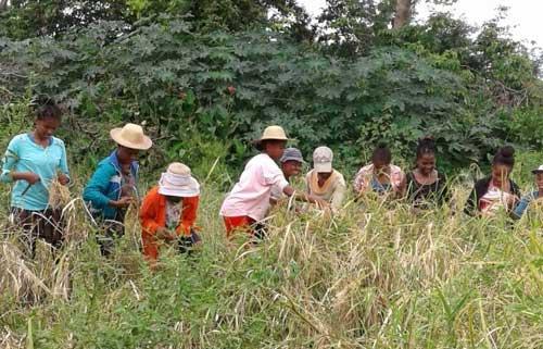 Les enfants de orphelinat des Filles de Marie à Madagascar ramassent de l'herbe pour les animaux pendant leurs vacances