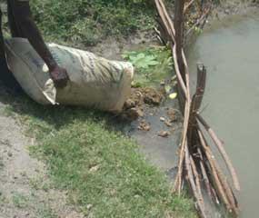 Fumier et d�chets organiques sont vers�s pour fertiliser les bassins d'�levage