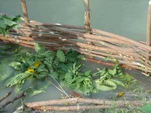 Paille et débris végétaux sont versés en association avec les déchets organiques pour fertiliser les bassins d'élevage