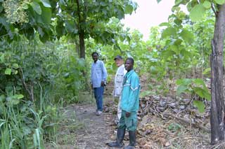Visite de la plantation de Kévé au Togo