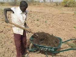 Répartition du compost dans les trous de Zaï