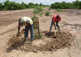 Entretien des diguettes en demi-lune pour la conservation de l'eau