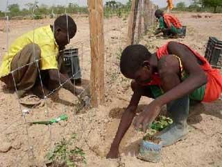 Préparation des sols pour le Zaï