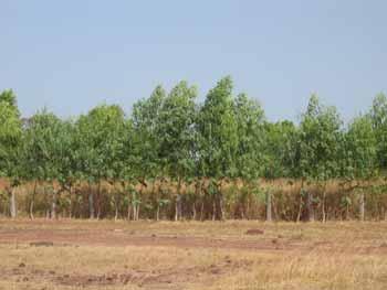 Des arbres de haut jet prennent place au sein des parcelles.
