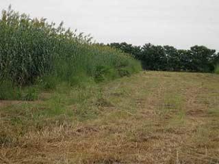 Prairie pour expérimentation agricole au Burkina Faso