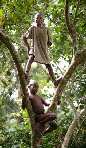 Enfants Pygmées Bagyeli grimpant dans un arbre en forêt