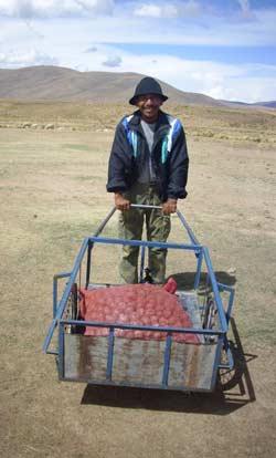 Distribution d'une variété résistante de patates à Ch'alla, sur l'Altiplano bolivien