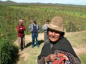 Culture du quinoa en Bolivie