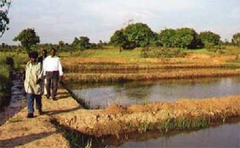 Bassin de tilapias du Village d'Enfants Bumi de Karavia