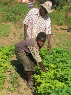 Le potager du Village d'Enfants Bumi de Karavia