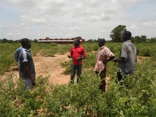 Choix du terrain  pour la construction du bloc administratif du collège de Guiè au Burkina Faso