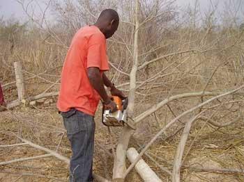 Formation des bûcherons élagueurs à Guiè, Burkina Faso