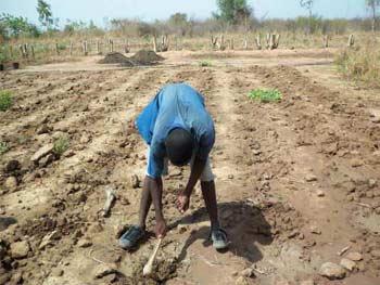 Semis précoce des céréales selon la méthode Zaï, Burkina Faso