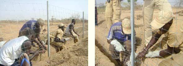 Pose du grillage sur les piquets de clôture, Ferme Pilote de Goèma, Burkina Faso