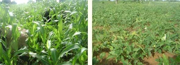 Le paysans ont commencé à semer, Ferme Pilote de Goèma, Burkina Faso