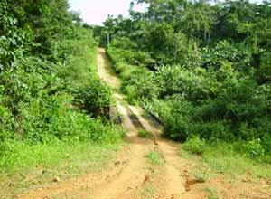Une route à Moya, village de brousse au Cameroun