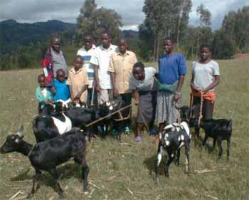 Acheter une chèvre en don solidaire