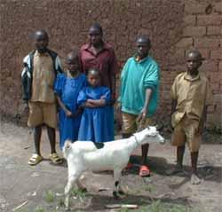 Offrir une chèvre en cadeau solidaire