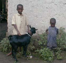 Donner une chèvre en cadeau solidaire