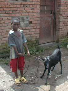 Donner une chèvre à un orphelin