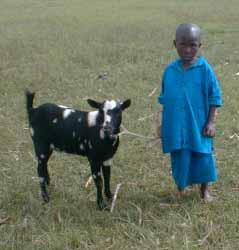 Acheter une chèvre en don humanitaire