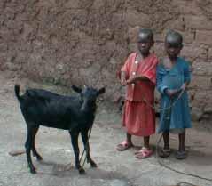 Offrir une chèvre en don humanitaire