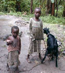 Petit élevage pour les orphelins du sida