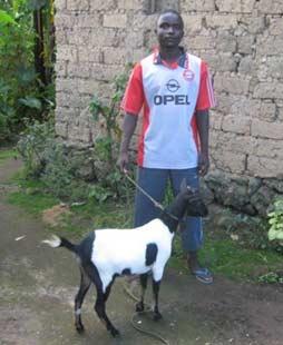 Une chèvre pour l'augmentation des revenus familiaux