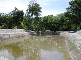 Bassin d'élevage avant fertilisation