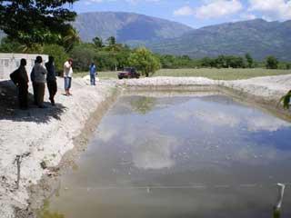 Bassin d'élevage de tilapia