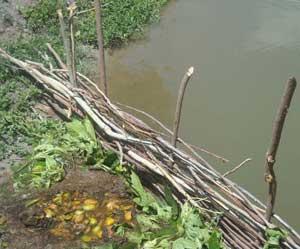 Préparation du compost pour l'élevage de tilapias