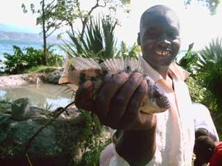 Specimen de tilapia de l'élevage de Thomazeau en Haïti