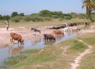 Elevage associé à la pisciculture